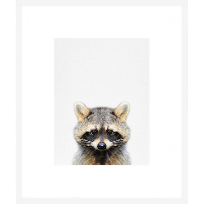 Boxed Frame Racoon